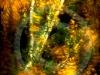 Gérompont 01-11-2011-(Hasselblad - P21+)