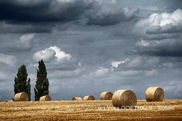 Moisson 2012(Lumière et ambiance Capture One et Photoshop)